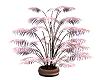 Beautiful Tall Plant