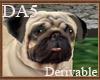 (A) Pug Pet