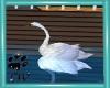CW Animated Swan