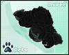 [Pets]Shayde|shldr roses