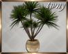 Yucca Plant Yoga