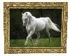 A Beautiful White Horse