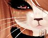 🅜 BONBON: whiskers