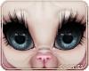 🐾 Lola | Eyes 2T 1