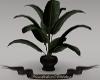 Gents Plant