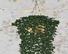 Home / Plant 4