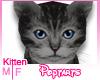 Grey.Kitten!