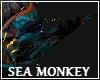 Sea Monkey Ears