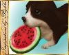 I~Cocoa Frisbee Dog