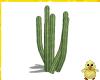 !! Day Cactus 1