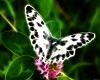 rave butterfly