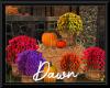 Fall Flowers & Pumpkins