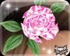 ! Aly pink rose