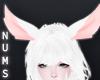 White Fantasy Ears
