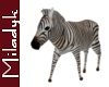 MLK Ani Zebra