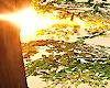 Sun Flare/Filter II