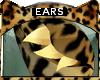 Bengal * Ears