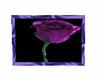 purple rose picture 3