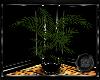 ~BB~ Jungle Plant