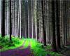 *L* Forest Path BG