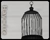 :Empty Black Cage