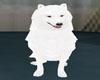 (N)Samoyed_lase
