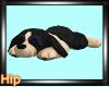 [HB] Belles Pup