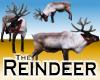 Reindeer -v1a