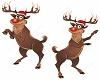 (AF) Rudolf Dance