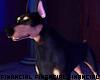Diablo -Guard Dog