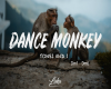 Dance Monkey pt1