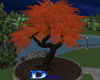 1520 Autum Tree