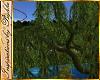 I~Park Willow Tree