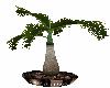 Decore Palm Tree