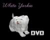 White Yorkie