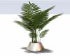 :3 Palmera Plant