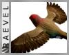 !R! Youtubeplayer  Birds