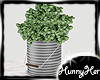 Farmhouse Bucket  Plant