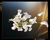 Juditte wedding bouquet