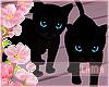 . Kitten ~ Cat ~ Kittens
