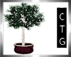 CTG  REGAL TREE/ LGHTS