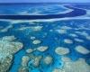 . Coral Reef .