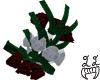 [LL]Red & White Roses