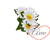 Bouquet Daisy W Detailed