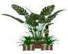 PORTOFINO POTTED PLANT