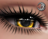 Golden Queen Eyes