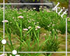 [Kit]Wild Grass