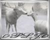 Lakefront-House (Deer)