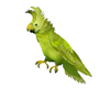 Talking Parrot anywhere