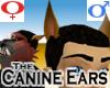 Canine Ears